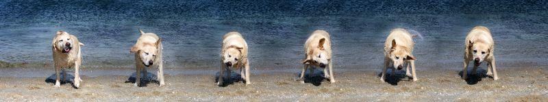 Bornholmurlaub mit Hund